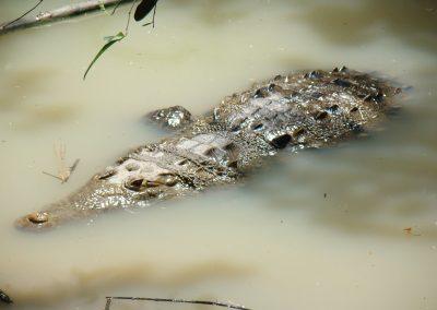 croc (4)